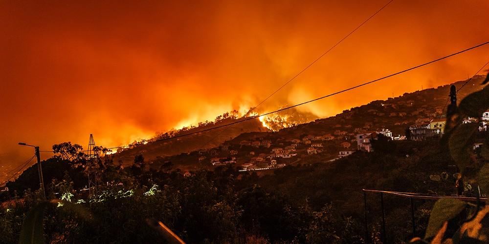 wildfire newweb