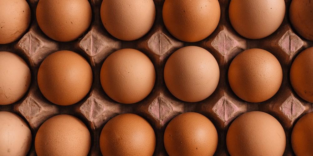 eggs newweb