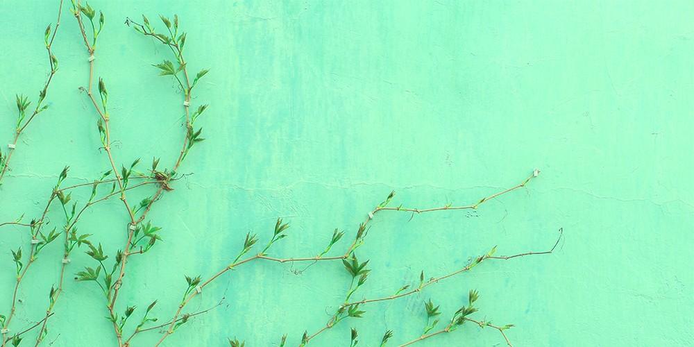 green newweb