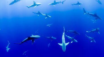 Five risks as Britain enters dangerous waters