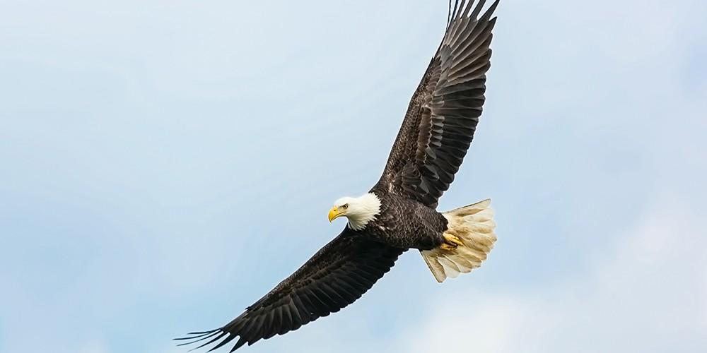 eagle newweb