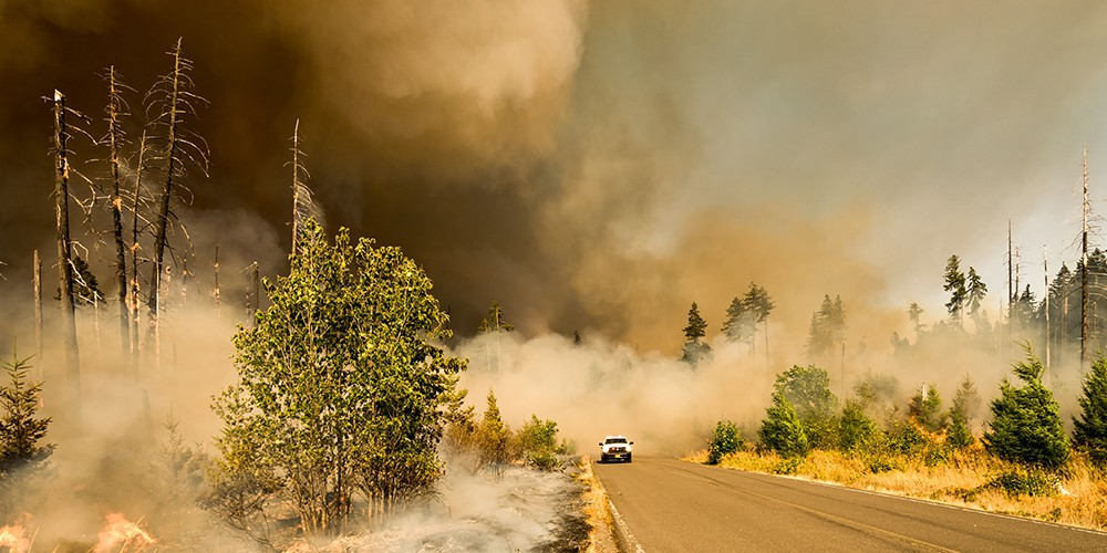 forest fire newweb