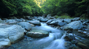 Sustainable inflows break new records